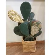 cactus-di-pezza