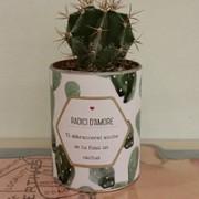 cactus-san-ti abbraccerei