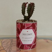 cactus-san-valentino-ci-vuole-radici-e-terra-fertile
