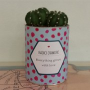 cactus-san-valentino-evrithing-grows-with-love