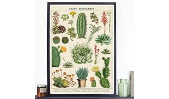Poster vintage cactus