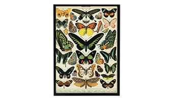 Poster vintage papillon