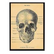 poster-vintage-skull-cavallini&co