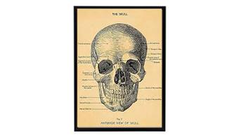 Poster vintage skull
