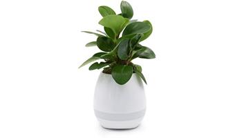 vaso per pianta grassa musicale