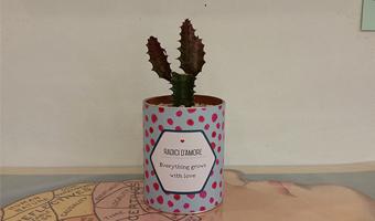 cactus-radici d'amore
