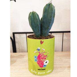 cactus in barattolo