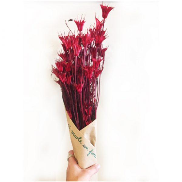 fiori secchi rossi