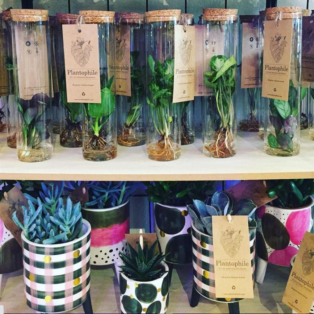 Piantofili, sono arrivate le piante idroponiche!!